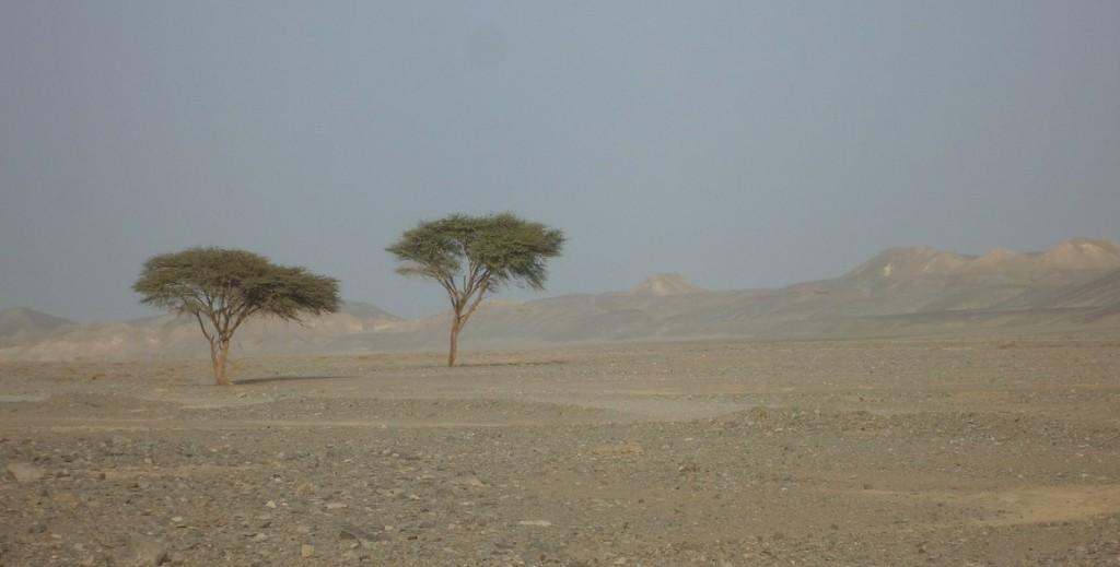 egypt-245124_1280_crop