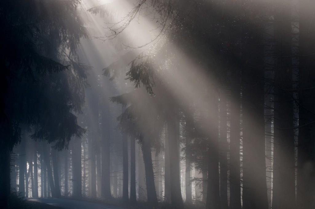 fog-693401_1280